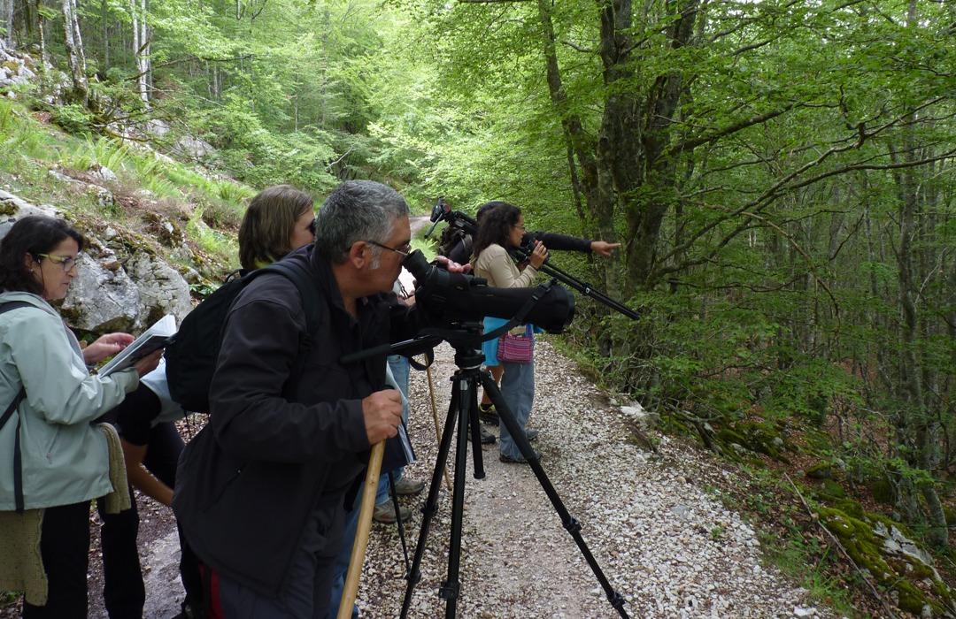 Un grupo de gente observa aves en un bosque.