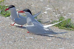 Curiosidades sobre las aves. 11 días volando sin parar