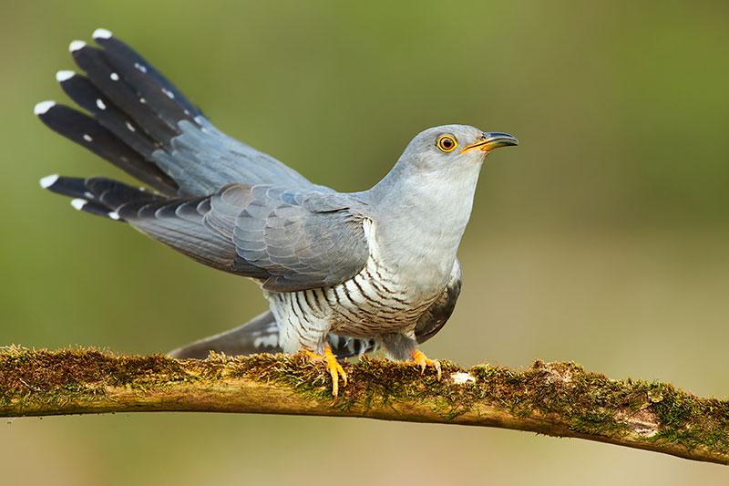 Birds fun facts. A very crafty bird