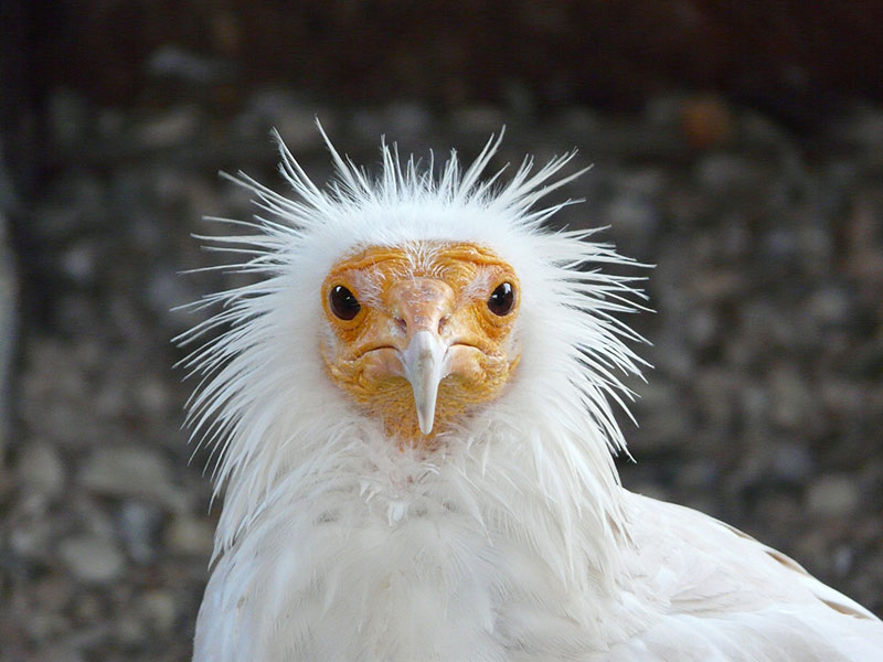 Birds fun facts. Give me a rock and i´ll eat eggs