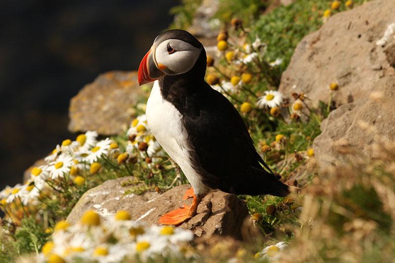 Curiosidades sobre las aves. Aprovechar un viaje al nido