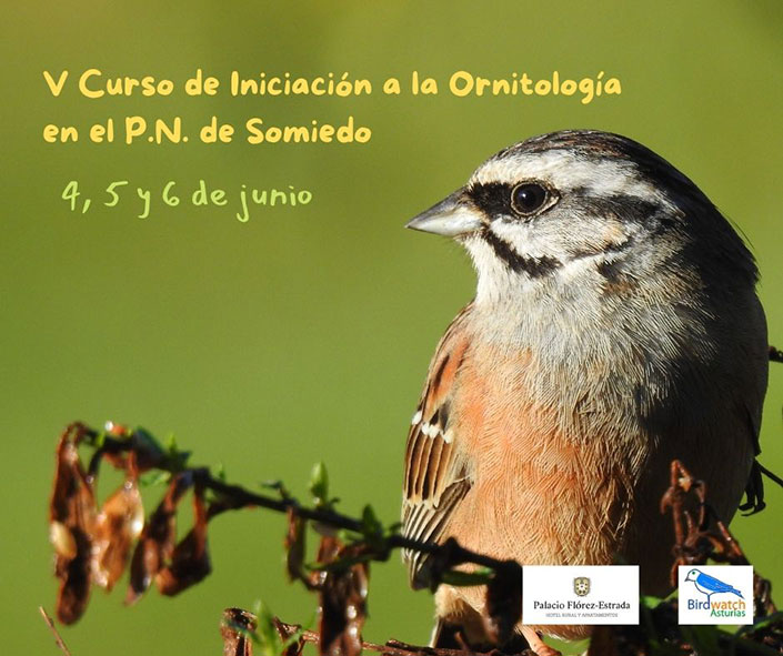 V Curso de iniciación a la ornitología en Somiedo