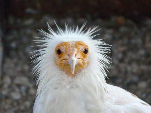 Curiosidades sobre las aves. Dame una piedra y comeré huevos