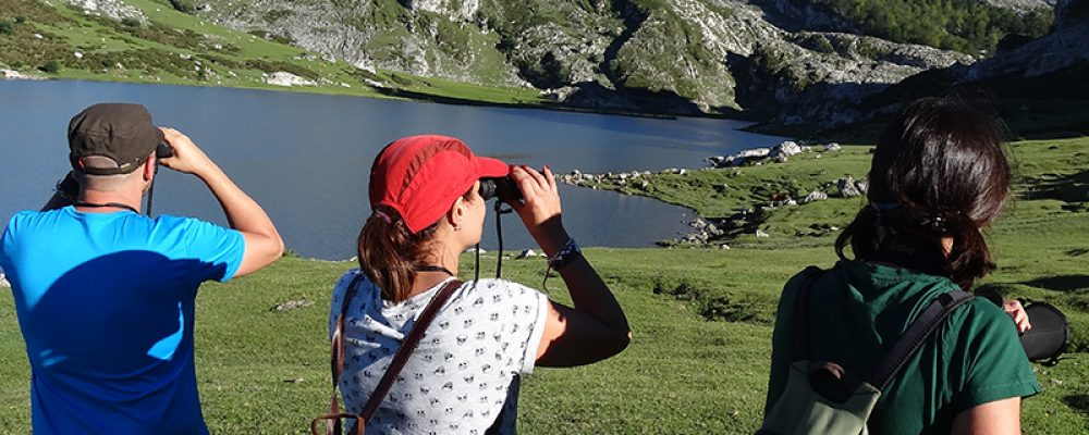 Birdwatch Asturias -wild life watching